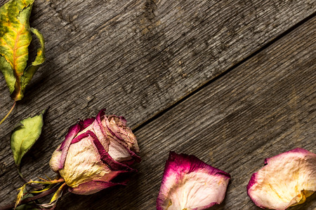 Faded rose on wooden background. Can be used as background Stock Photo