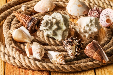 Seashell and rope on a light wooden background Stock Photo