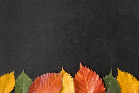 Autumn leaves on a chalkboard 写真素材