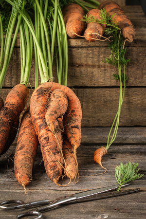 Fresh Organic Carrots  on wooden background, rustical. Vegetables harvest