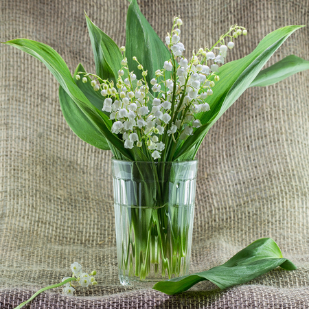 A bouquet of lilies of the valley in a simple glass vase on a table. Background with fragrant May lilies of the valley