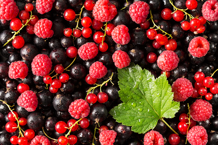 Black and red currant with raspberry, closeup