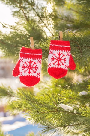 baby red mittens on winter pine tree. winter still life. Winter holiday composition. copy space Foto de archivo