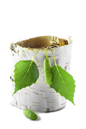 Twisted piece of birch bark with green branches.