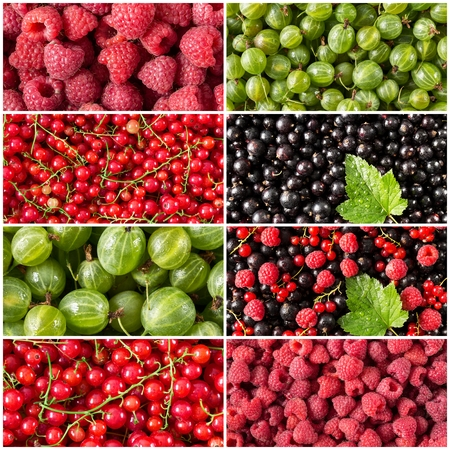 Colorful collage of different berries. Set of  berries. Collection of fresh ripe food. Summer harvest of berries