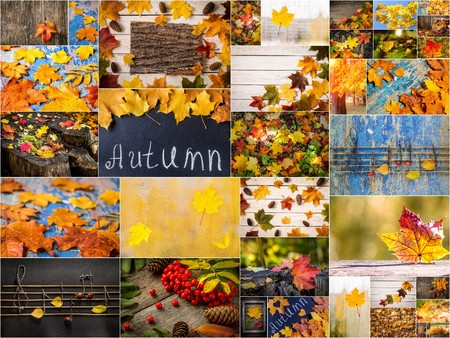 Colorful autumn collage. Beautiful colored fall pictures. Autumn creative set of photos.