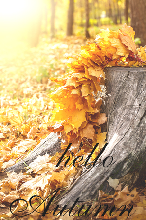 Maple Leaves on tree cut. Autumn background concept. HELLO AUTUMN greeting card. Maple, yellow foliage, September, October, November, wooden stump. Autumnal template for text.