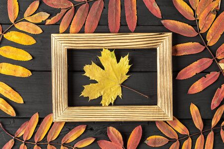 photo frame and colorful autumn leaves on black background