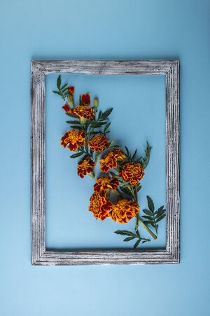 Creative layout made with beautiful flowers on blue background. Marigold flower on pastel paper background. Flowers composition. Flat lay, top view Reklamní fotografie