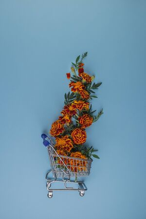 Creative layout made with beautiful flowers on blue background. Marigold flower on pastel paper background. Shopping cart with marigold flowers. Flowers composition. Flat lay, top view Reklamní fotografie