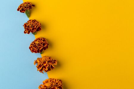 Floral pattern of marigold flowers on the blue and yellow background. Flat lay, top view. Floral background. Summer minimal concept, copy space Reklamní fotografie