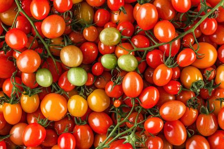 Fresh organic cherry tomatoes as background, closeup. Red tomatoes background. top view. Organic vegetable production. Vegetables harvest Reklamní fotografie