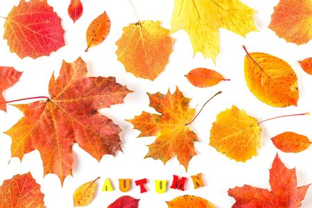 Autumn card of colored leafs on white background with a AUTUMN text message. Autumn composition with colorful leaves of different trees