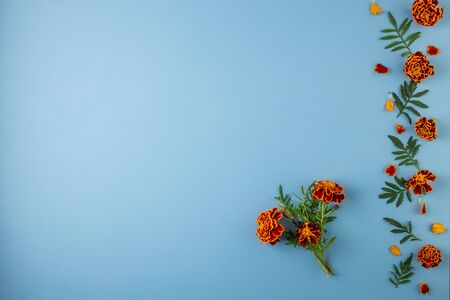Flat lay composition with orange and yellow marigold flowers on a blue pastel paper background, with copy space. Trendy minimal style. Top view, Flat lay.