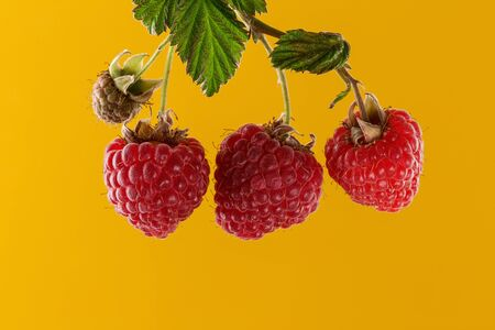 Raspberries on bright yellow paper background with copy space, template for text or design. Summer food. Natural organic products. Healthy lifestyle, Top view, Flat lay.
