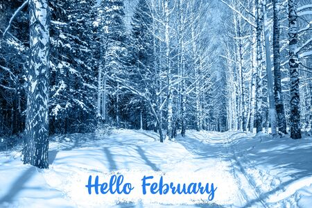 HELLO FEBRUARY greeting card. Snow trees in park toned in trendy Classic Blue color. Winter landscape of snowy trees in the forest