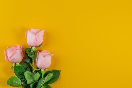 Pink roses on pastel yellow background. Birthday, Mother's, Valentines, Women's, Wedding Day concept. Spring blossom season. Minimal Holiday Composition. Copy Space