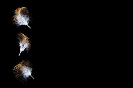 Yellow feathers with black background. Abstract soft feathers floating in air isolated on black background. Composite image with selective focus.
