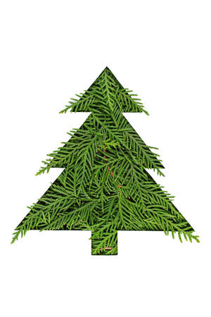 Chrristmas tree made of coniferous tree branches on white background.