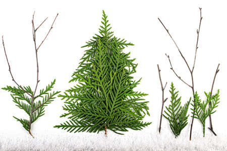 Green Chrristmas tree made of coniferous tree branches on white background. Imagens