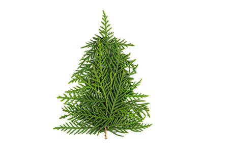Green Chrristmas tree made of coniferous tree branches on white background. Minimal composition background. New Year and Christmas concept.