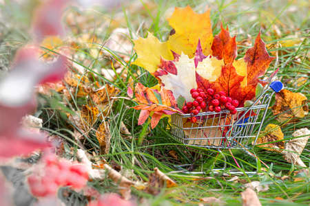 Halloween and Thanksgiving concept, autumn sales. Fall season. maple leaves, berries in supermarket trolley. Autumn season image style.