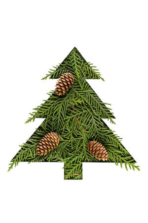 Green Chrristmas tree made of coniferous tree with fir cones on white background. Minimal composition background.