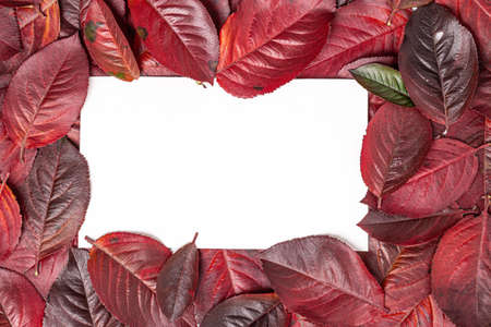 Autumn leaves frame on a white background. Colorful frame of autumn leaves