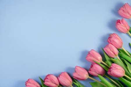 Pink tulips flowers on blue background. Card for Mothers day, 8 March, Happy Easter, Valentines Day.