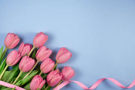 Pink tulips flowers with ribbon on blue background. Card for Mothers day, 8 March, Happy Easter, Valentines Day. 写真素材