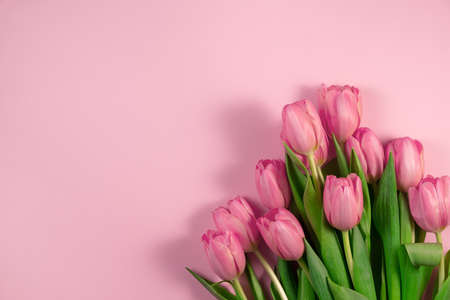 Tulips flowers on pink background 写真素材