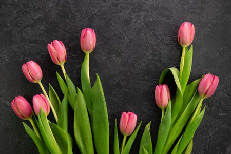 Pink tulips flowers on a dark concrete background 写真素材