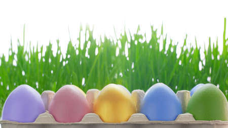 Colorful easter eggs with green grass on a white background. Card for Happy Easter. 写真素材