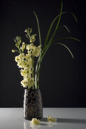 minimal: Fresh flowers in black vase, split lighting. Stock Photo