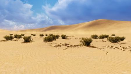 sandhills: Desert landscape with dry plants on foreground