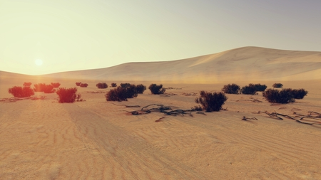 waterless: Desert scene with dry shrubs on foreground at sunset 1