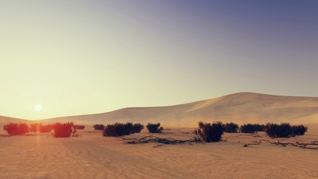sandhills: Desert scene with dry shrubs on foreground at sunset 2 Stock Photo