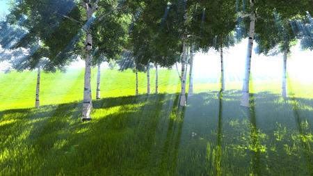 marge: Birch grove edge in spring 3