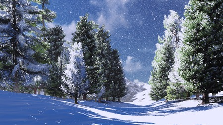Snowy pine wood in the mountains 1