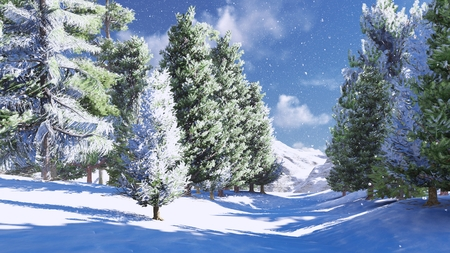 Snowy pine wood in the mountains