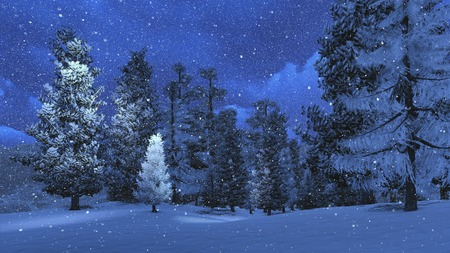 frozen winter: Winter night in the snowbound pinewood 2 Stock Photo
