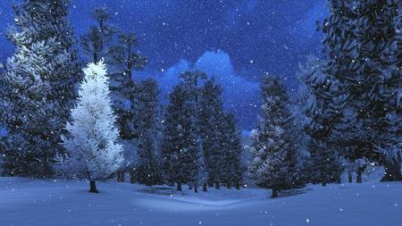 enero: Noche de invierno en la madera de pino nevado 3 Foto de archivo