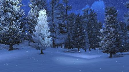 Winter night in the snowbound pinewood