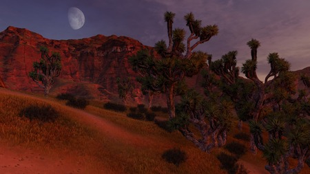 thickets: Thickets of Joshua trees and red rocks under half moon Stock Photo