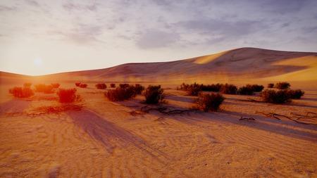 plantas del desierto: Puesta del sol en las dunas de arena. Las plantas del desierto en un primer plano