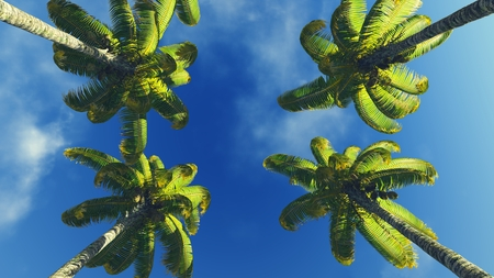 treetops: Palm treetops and blue sky at daytime