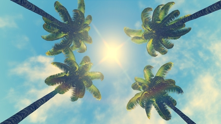 zenith: Four palm trees against blue sky with sun at its zenith