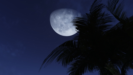 stargazing: Palm tree silhouette against night sky with a crescent