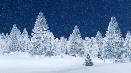 snowcovered: Snow-covered spruce forest at magical snowfall night