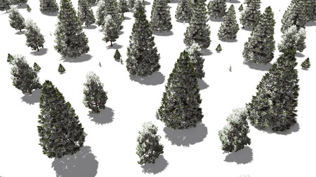 topdown: Top-down view on a snow-covered winter spruce forest during daytime Stock Photo
